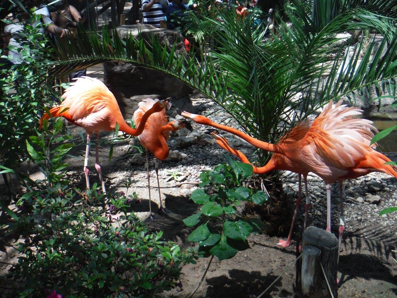 Bosque Zoologico de Mexicali